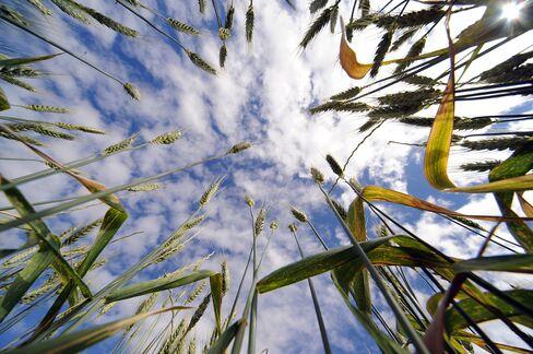 Grain, Soybeans Rise