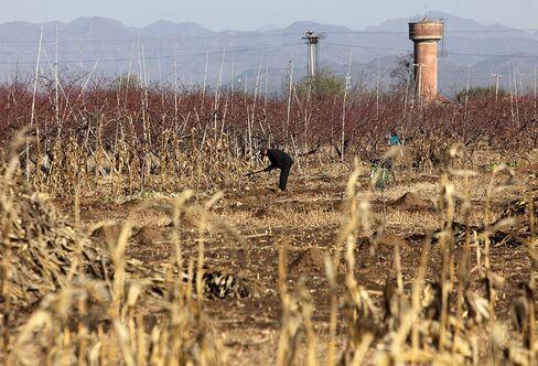 China Rural-Income Gains Aid Economic Shift Toward Consumption