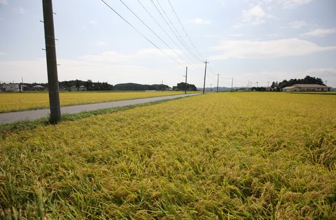 Japan's Rural Financial Firms Should Combine, LDP Lawmaker Says
