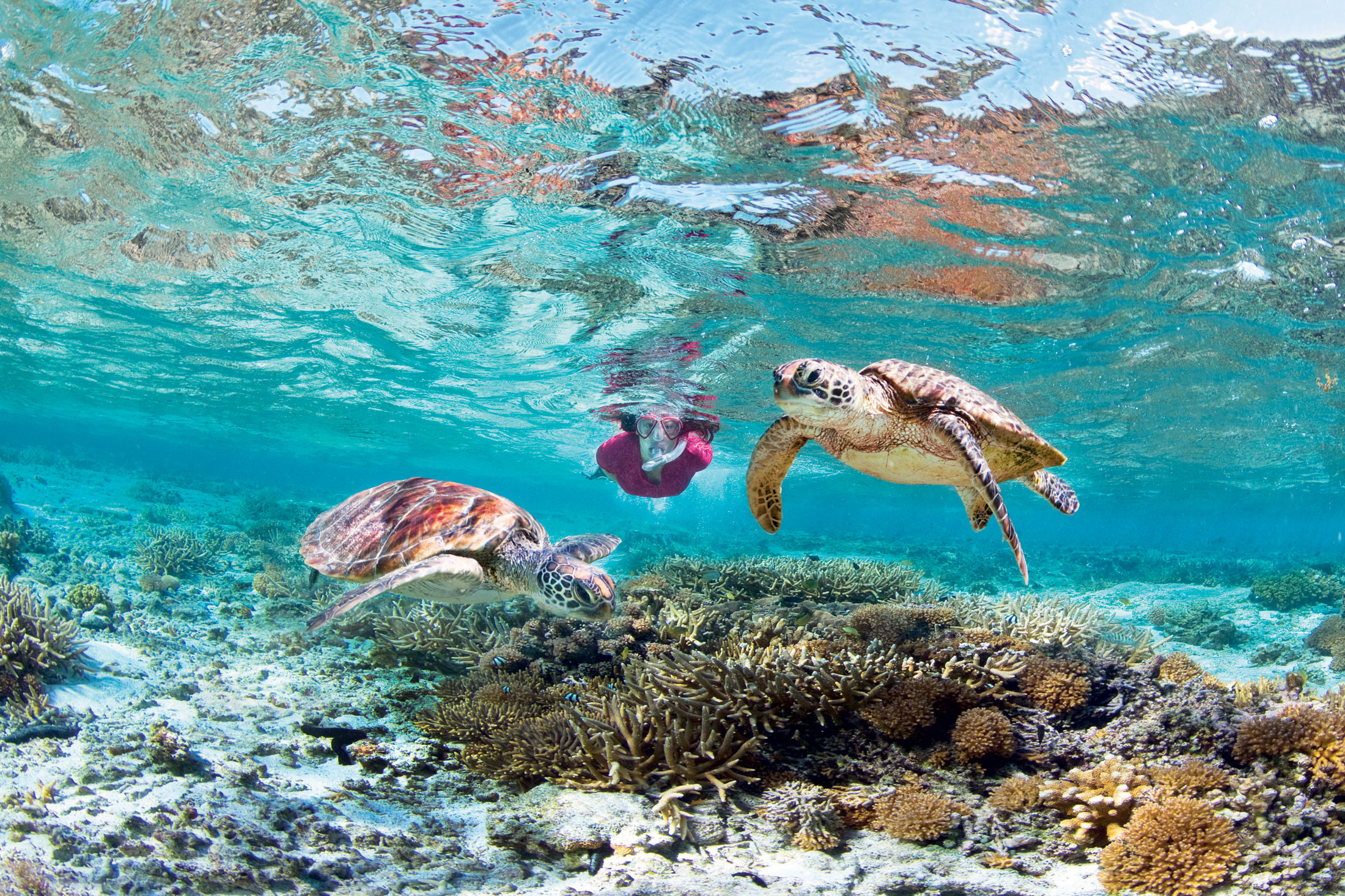 The great barrier reef essays 250-350 words