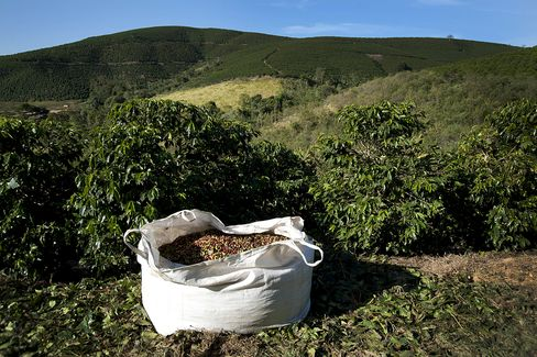 Record Brazil Coffee Crop Cuts Costs for Starbucks