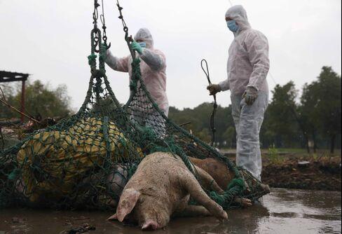 Bird Flu to Dead Hogs Curb China's Soybean-Import Demand