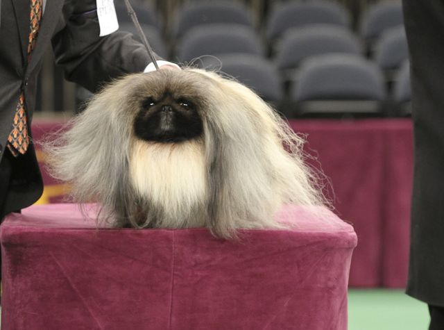 If only we had a real watchdog for the financial industry. Photographer: Jack Grassa/Westminster Kennel Club via Bloomberg
