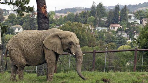'An Apology to Elephants'