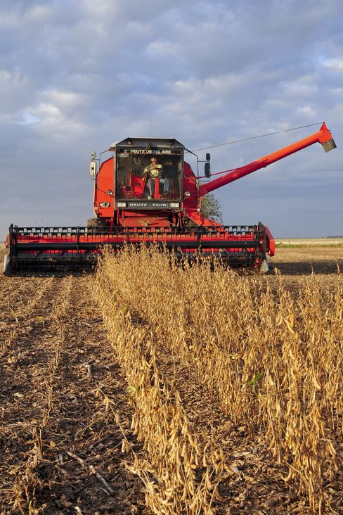 Peso Swings Abate as Farmers Keep Soybeans