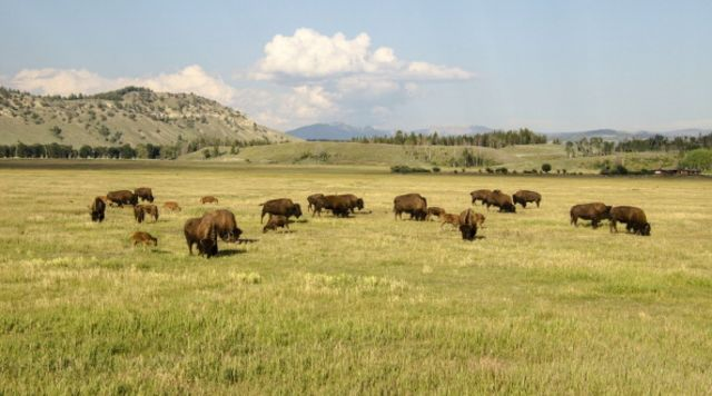 There will be disagreement on direction in Wyoming.