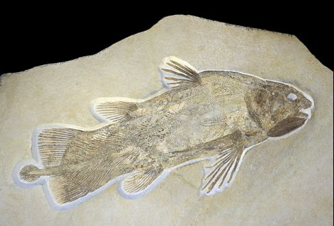 Living-Fossil Fish's Genome Gives Clues to Landlubbers' Life