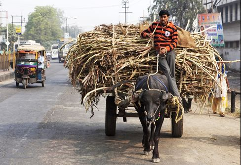 Sugar Harvest in India Seen Missing Forecast