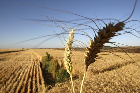 Wheat Climbs Surprise Demand From China, Weather Concern
