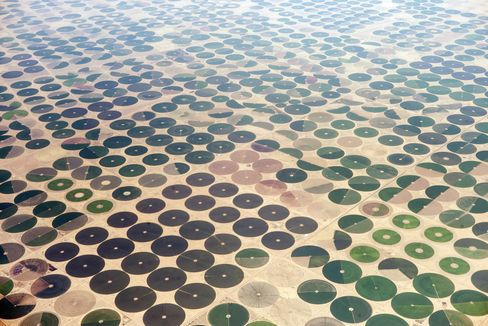 Farms in Saudi Arabia