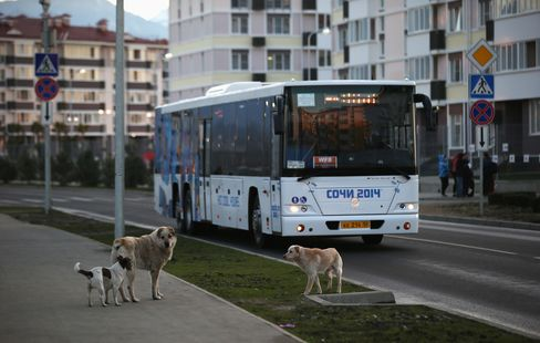 Stray Dogs Stand in front of an Olympic Bus in Sochi