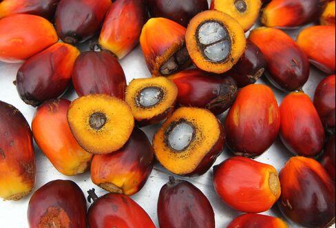 Oil Palm Fruit