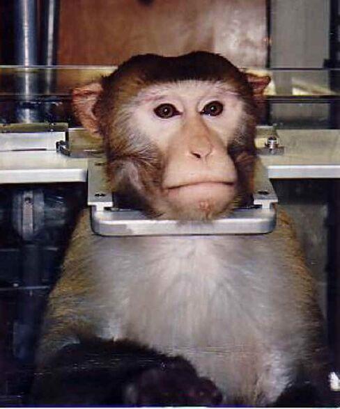 Stop Animal Exploitation Now!