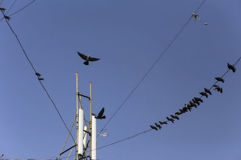 Birds sit on cables connected to the top of a mobile phone telecommunications tower in Mumbai. The goal set out by the government in January 2012 was for three-quarters of telecom towers in rural areas and a third of them in cities to run on solar by 2020. Photographer: Dhiraj Singh/Bloomberg