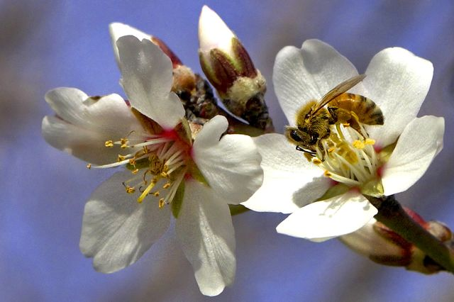 What happens when bees get an overdose of pesticide? They die.        Photographer: Phil Hawkins/Bloomberg