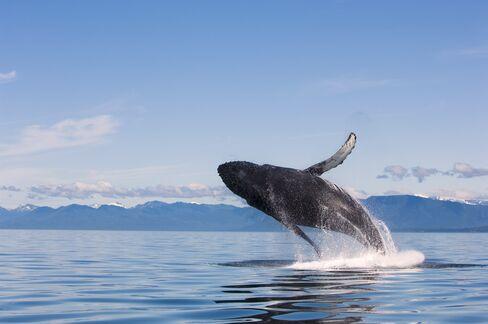 A Whale of a Tax Break