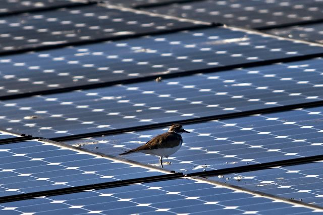 This is the kind of solar energy that doesn't incinerate birds. There's also the other kind.Photographer: Chip Chipman/Bloomberg