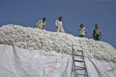 Men load cotton on a truck for transport in Rajkot, India. Output in India, the largest exporter after the U.S., may jump to a record in the season ending Sept. 30, according to the country's Cotton Advisory Board. Photographer: Adeel Halim/Bloo