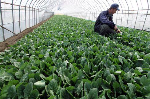 Japan Food Testing Regime After Fukushima Crisis Breeds Scep