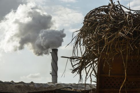 Sugarcane Stalks Sit at a Processing Plant in Brazil