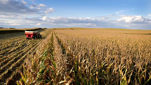 Farmers Plan Biggest Crops Since 1984, Led by Corn