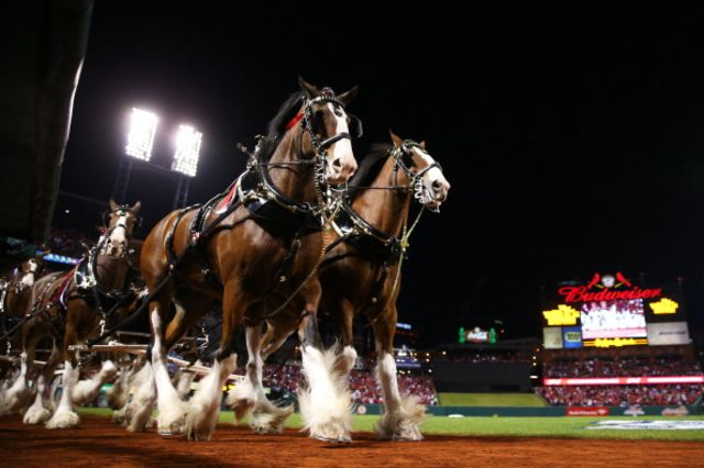 Great horses, lame beer. Photographer: Ronald Martinez/Getty Images