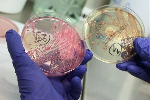 Non-Common E. Coli Forms Reported More Often in U.S.