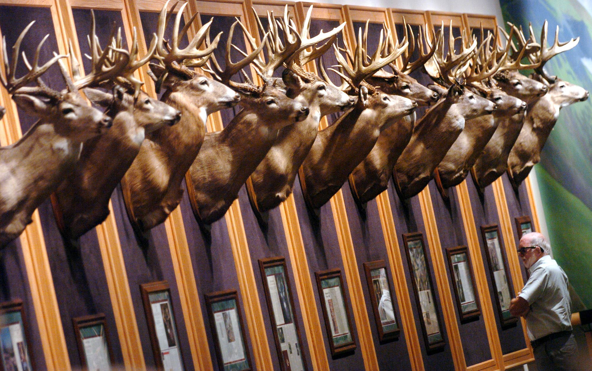A customer looks over the row of mounted deer heads in the Whitetail Museum inside a Cabela's store in Wheeling, W.Va.