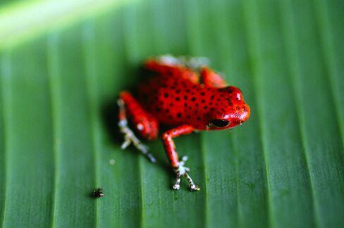 Preserving Biodiversity a Priority for UN