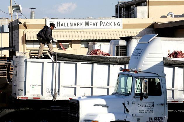 Westland/Hallmark Meats