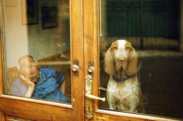 Odd Jobs: Prosthetic Dog-Testicle Maker