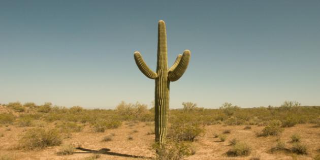 No. 23 Biggest Beer Drinker: Arizona