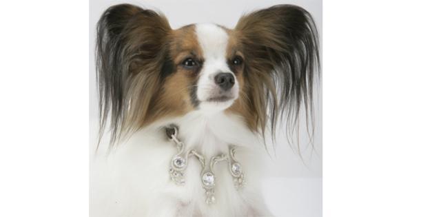 Amour, Amour Dog Collar