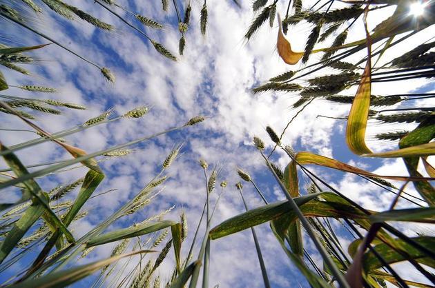 Australian Agricultural Activity