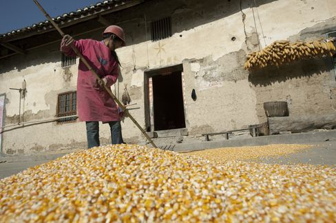 A Corn Farmer in Rural Hubei Province
