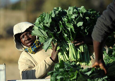 Zimbabwe Economy Threatened by Prospect of Mugabe Election Win
