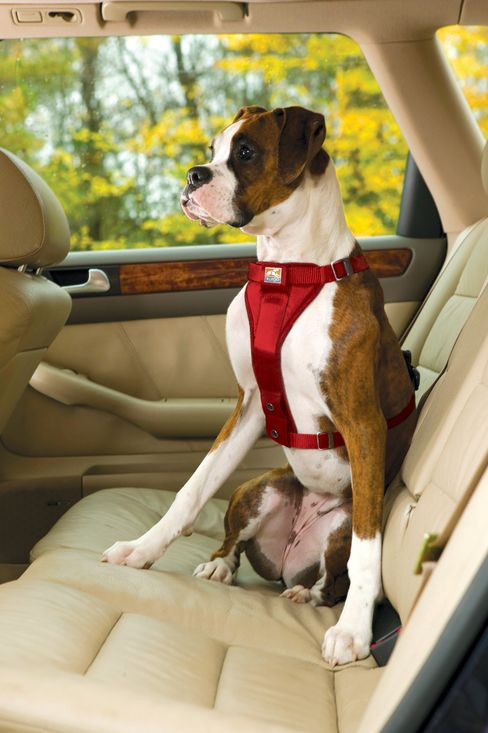 Doggie Seat Belt Cliff Looms in N.J. as Budget Challenges Grow