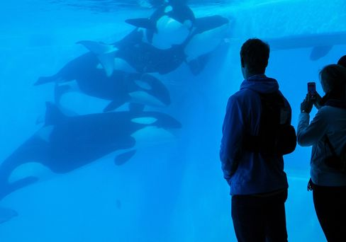 Killer whale life spans