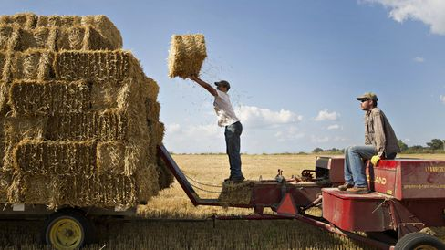 Farm hands stack bales of straw as they are collected in a field of where soft red winter wheat has been harvested.