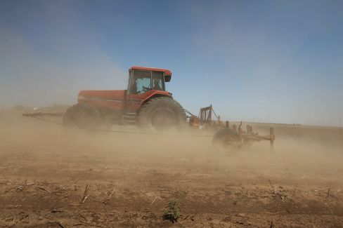 Texas Dust Bowl Drives Cotton Rally