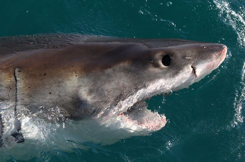 Shark Men's Filming Halted After Fatal Attack Near Cape Town