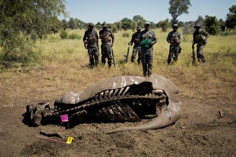 Rhino's Last Gasp Signals South African General's Return to War