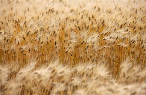 Wheat Price in Japan May Dip Most Since 2009