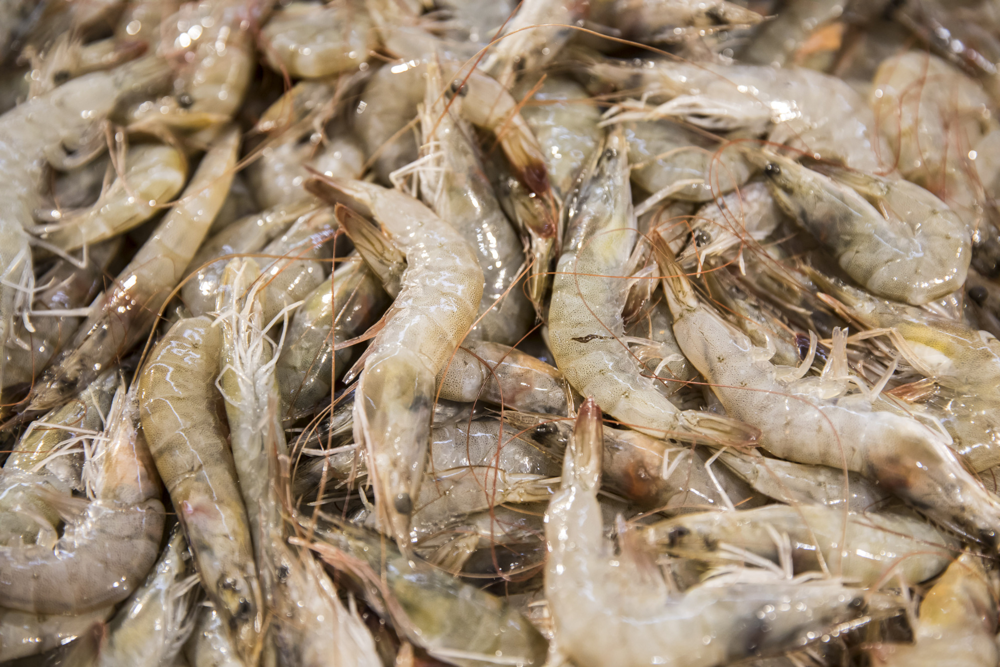 Dine on Saudi Shrimp in China: Oil Giant Tests a New Export - Bloomberg