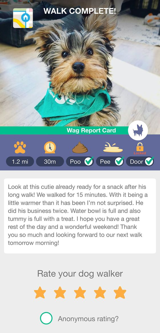 All Those Pandemic Puppies Mean Business for Dog-Walking Apps