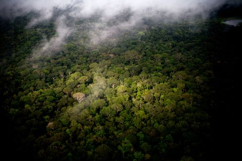 Amazon Deforestation Falls to Record in Brazil on Policing