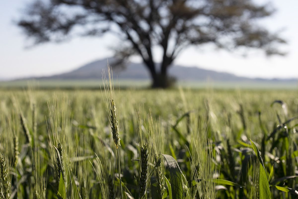 Zimbabwe Banks Agree to Help Fund Agricultural Production