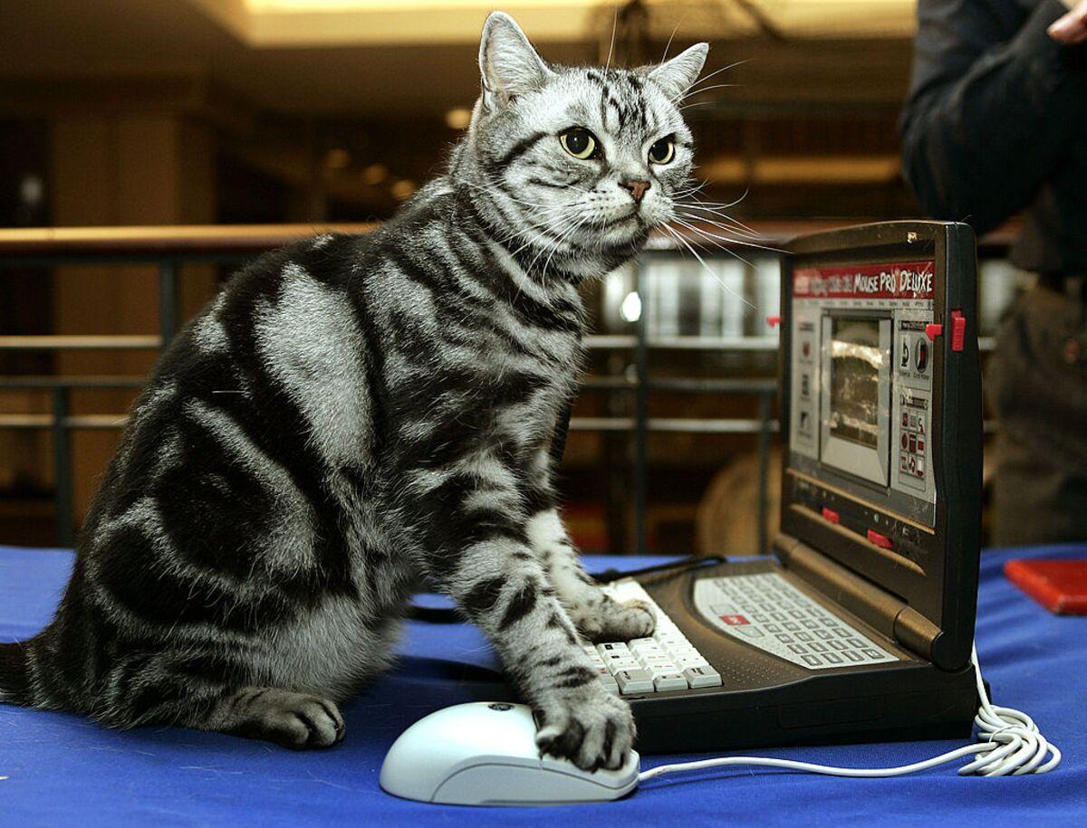 Сказки кошек с картинками территории
