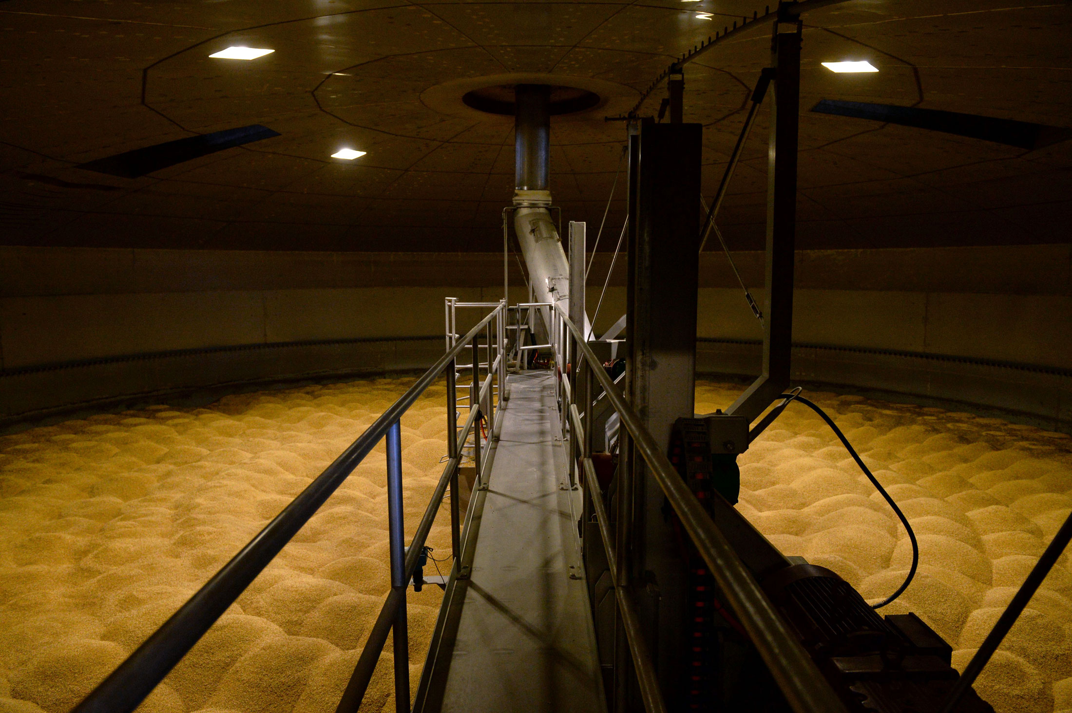 Barley in a tank during a stage of the malting process at the Boortmalt production facilities in Antwerp.