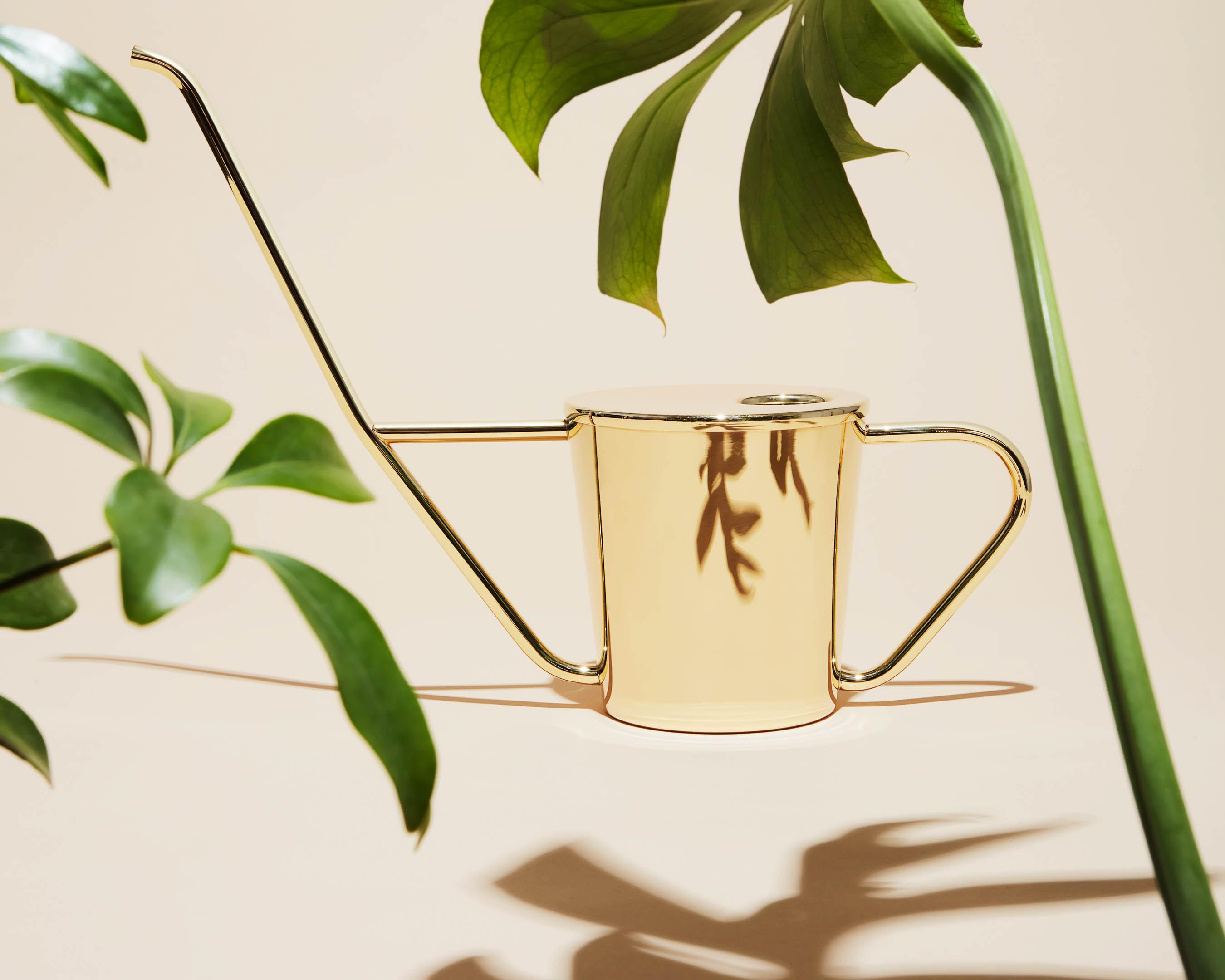 se rapporte aux arrosoirs si beaux qu'ils pourraient éclipser vos plantes
